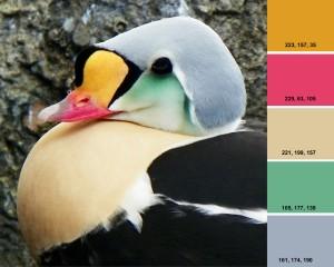 ColorWindows1r